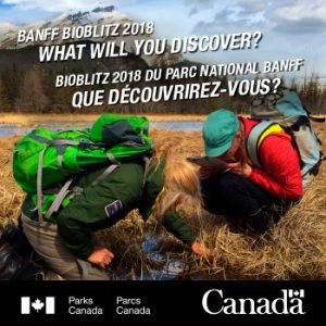Parks---350x350--BioBlitz---Feb-28-2018 (003)